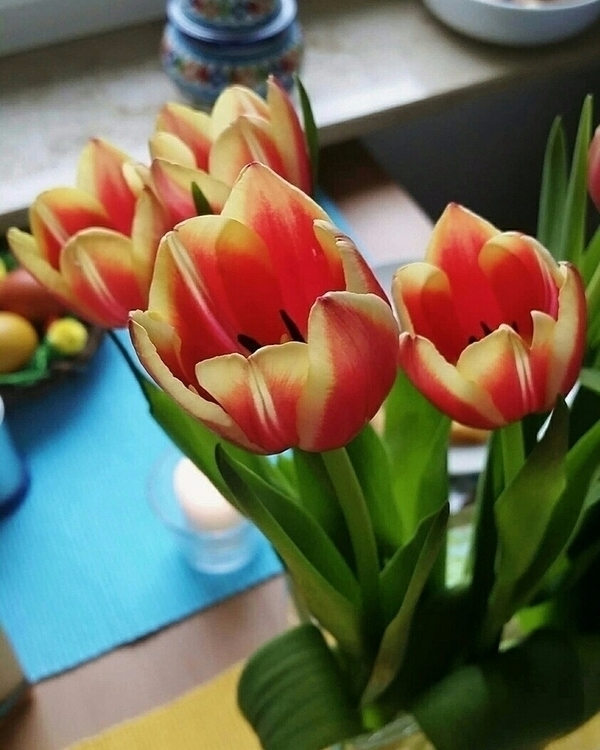 tulips, flowers - aleksaleksa | ello