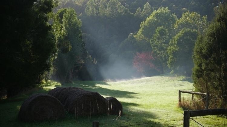 Morning farm - moods, victoriaOZ - nasigoreng | ello