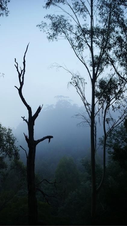 Misty morning Victorian Bush - moods - nasigoreng | ello