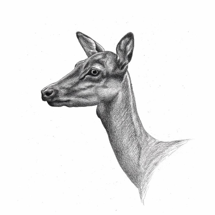 Doe Drawing. bit graphite kick - mydiagonallife | ello