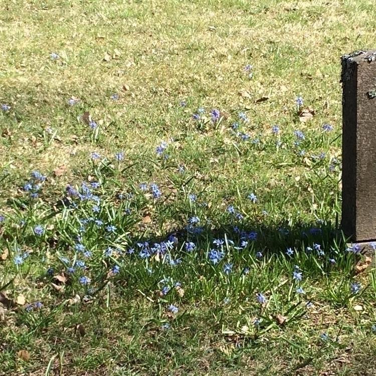 Kyrkogården smyckar vissa grava - skogskyrkogardar | ello