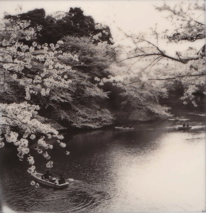 TOKYO CHERRY BLOSSOM, MEGURO, C - sinanoori | ello