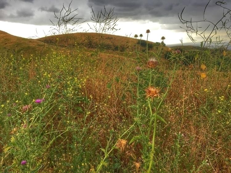 rain - weeds, wildflowers, aftertherain - melissa-me | ello
