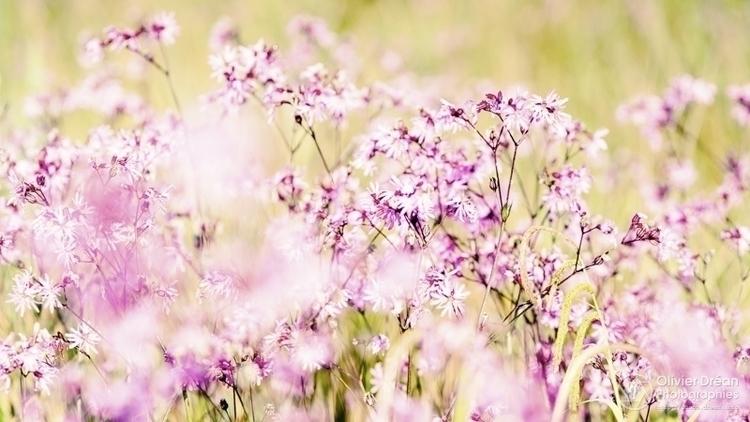 matin, dans les herbes hautes - printemps - olivier_drean | ello