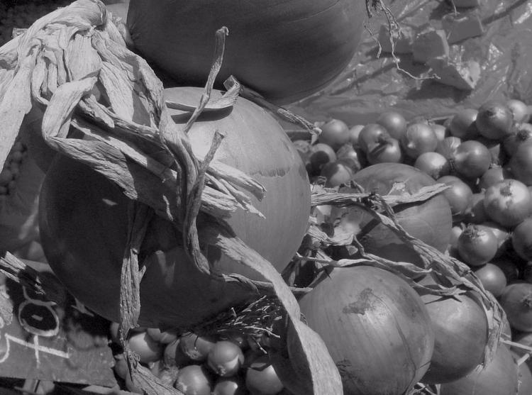 La Serena, Chile, 2007 - cebollas - gabrielnicolas | ello