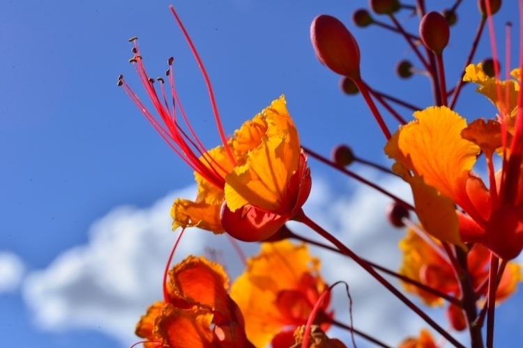 flower picture - georgerocheleau | ello