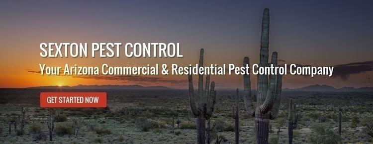 Bed Bug Extermination Phoenix:  - sextonpestcontrol   ello