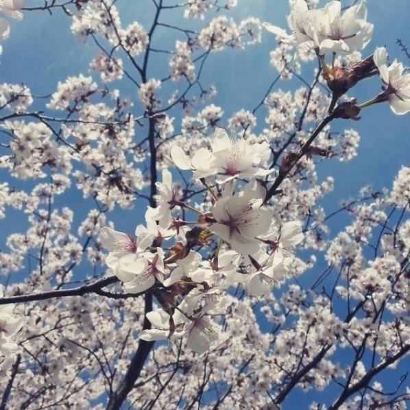 trees, nature, flowers, flora - ubiquitous | ello