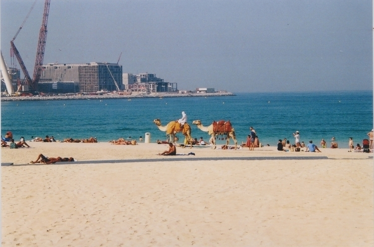 Wandering Camels // Dubai 2017 - marthah44 | ello
