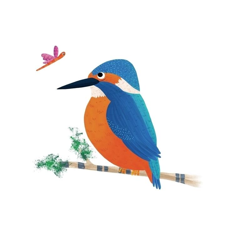 Kingfisher illo - kingfisher, digital - dogwood_finch   ello
