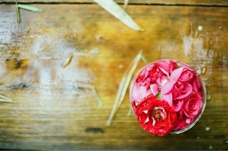 roses, flowers, Mexico, Oaxaca - francislechiara | ello