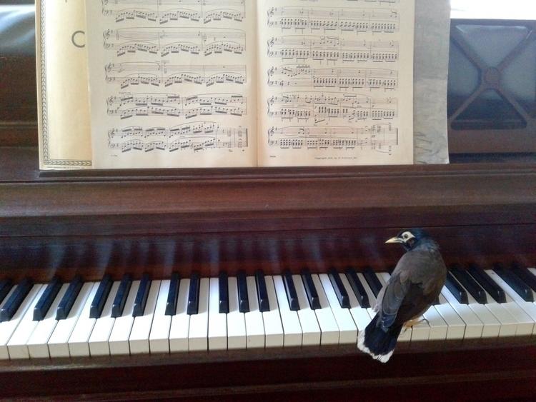 Loki, Chopin - photography, photo - valentinacano | ello