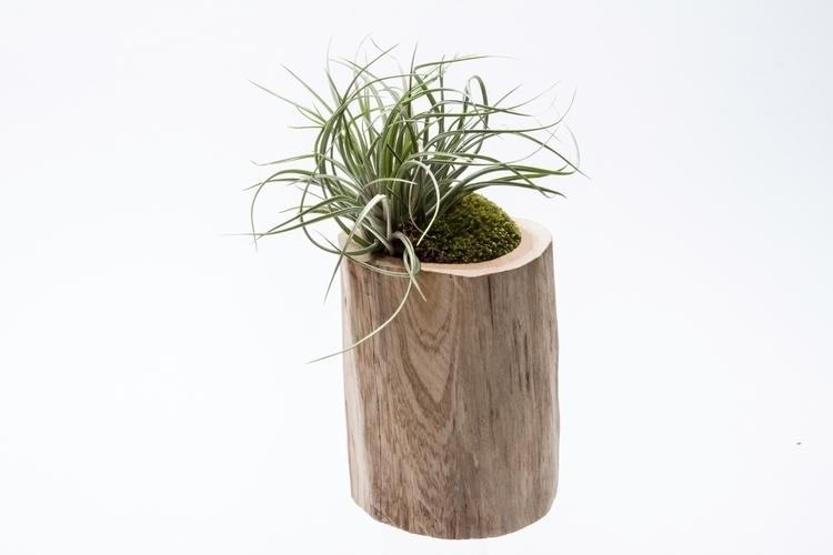 terrariums, kpterrariums, succulents - priscilla_murray   ello
