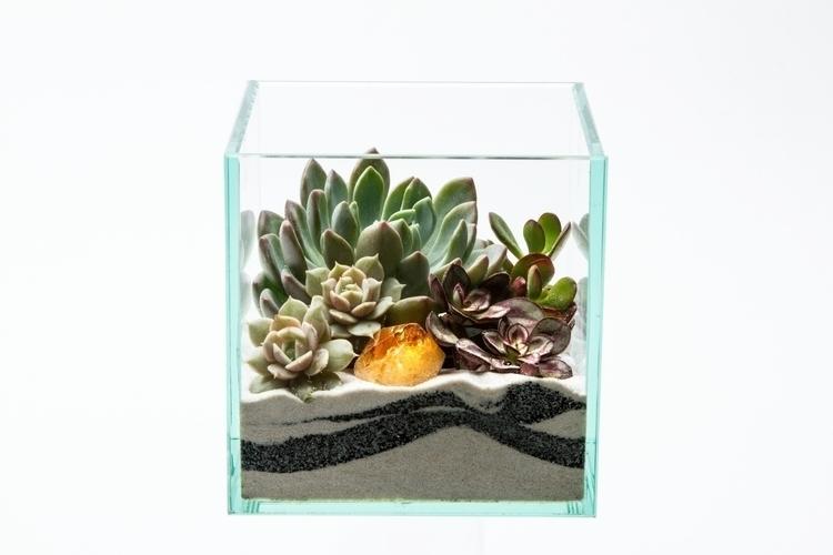 terrariums, kpterrariums, succulents - priscilla_murray | ello