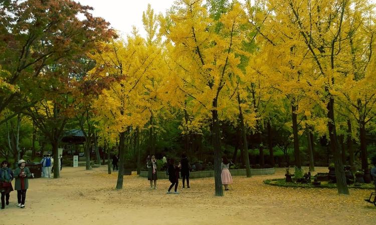 Autumn - Korea - 5hane | ello