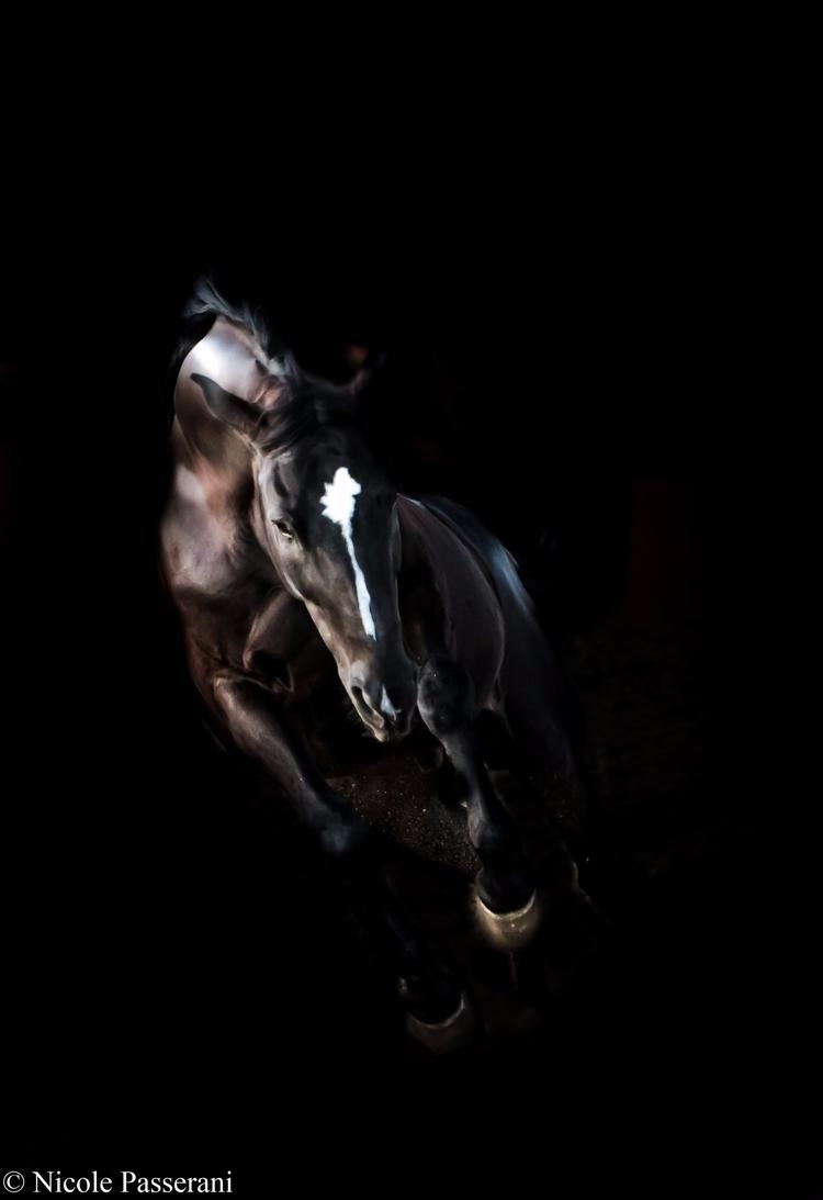 photography - horse, showjumping - nipasserani | ello