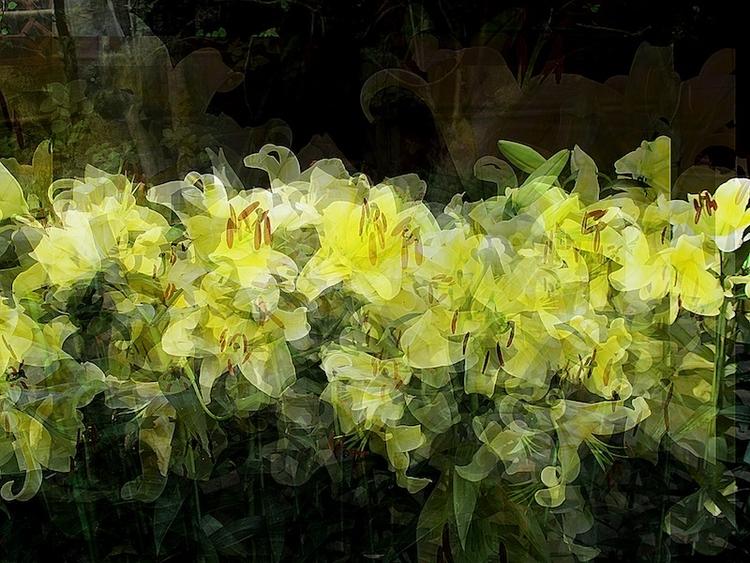 Hong Kong Flowers - hobahobot | ello