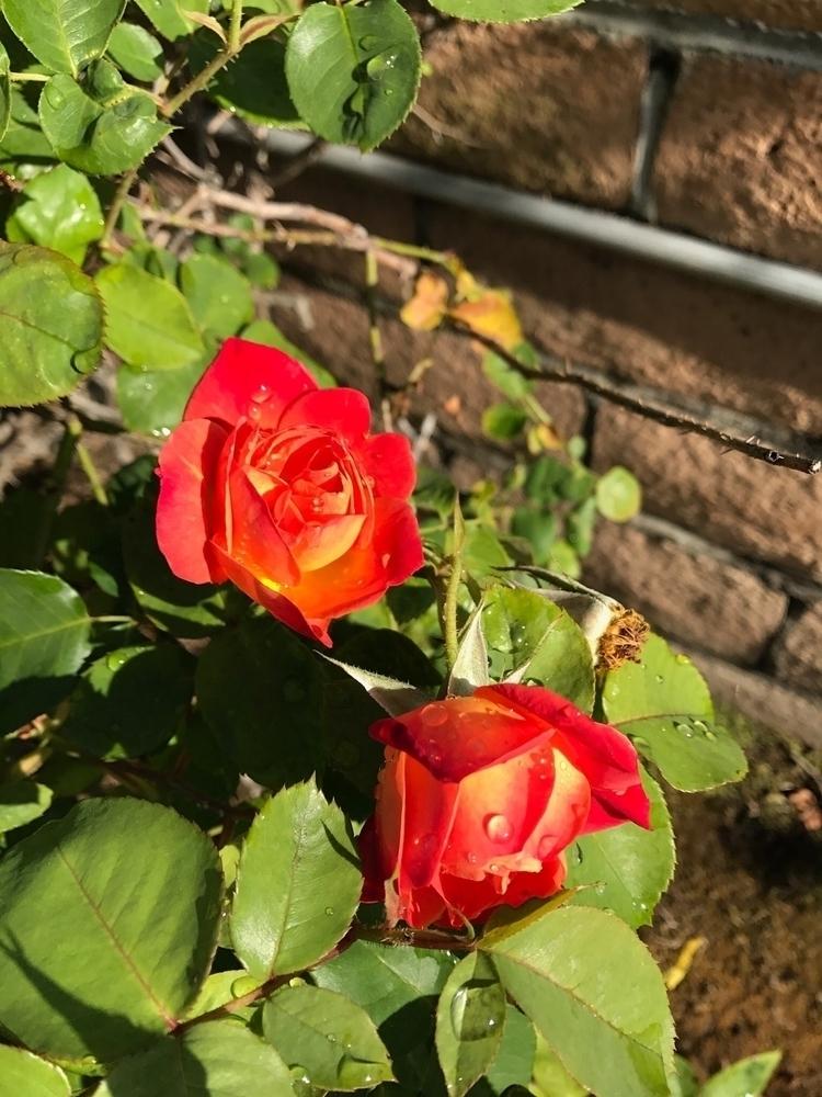 Flowers garden - abstractjesse | ello