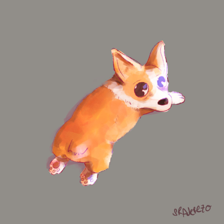 Corgi Bebe  - corgi, test, illustration - sr_aderezo | ello