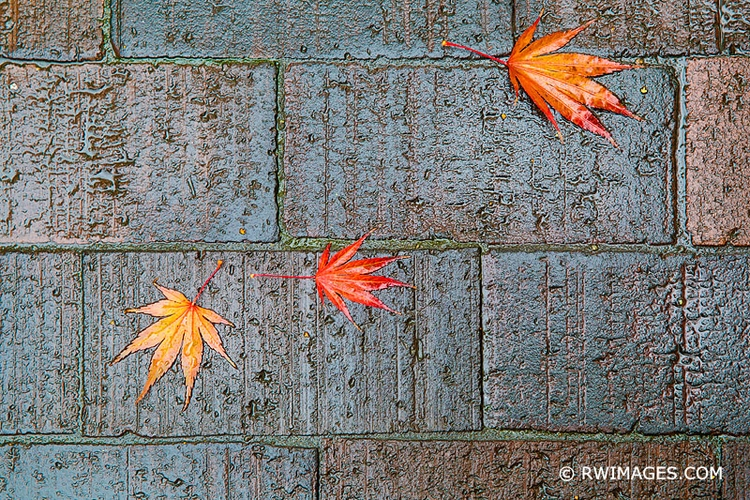 SEATTLE RAIN AUTUMN LEAVES View - rwi | ello