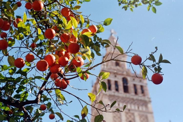 Sevilla - 35mm naranja - louchox   ello