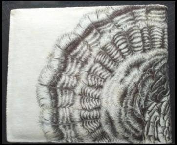 Renewable Turkey hand draw blac - mwchau | ello