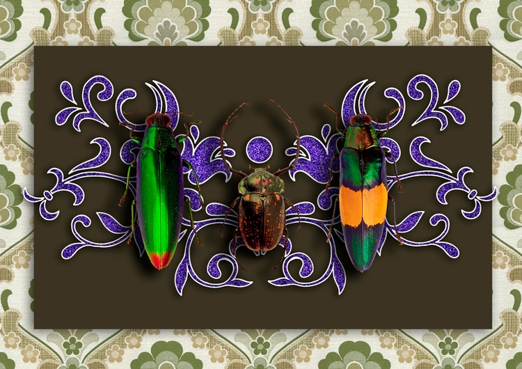 Trilogy Beetles - collage, art, illustration - gloriasanchez | ello
