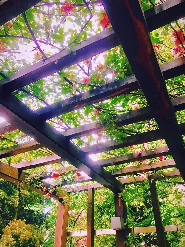 nature, sunny, beautiful - mamimumemami | ello