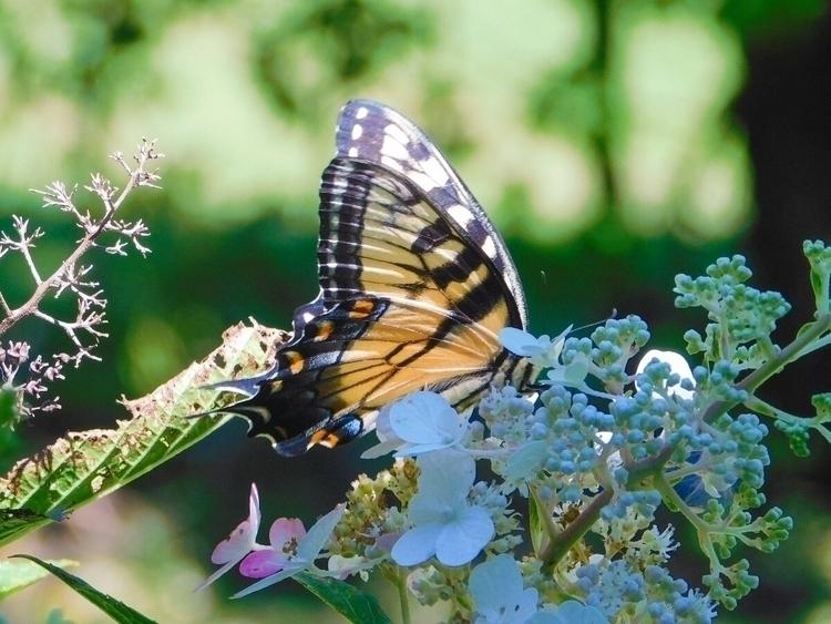 beautiful!:sunflower::blossom - butterflies - mountainwoman | ello
