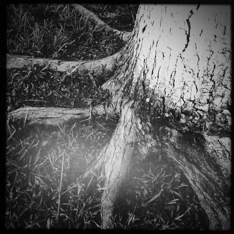 Ghostly Tree Roots Apps - mikefl99 - mikefl99 | ello