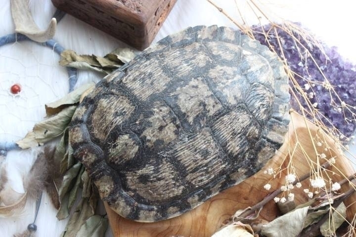 Turtle shells!!! babies listed  - arabellacrystals | ello