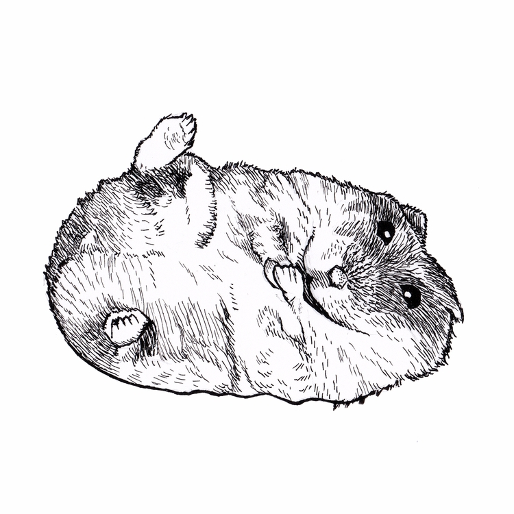 Hamster ink haaay. Year 35 Day  - mydiagonallife | ello