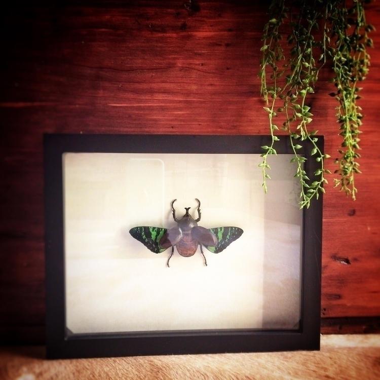 Finished Chimera beetle, taxide - pinsandbeetles   ello