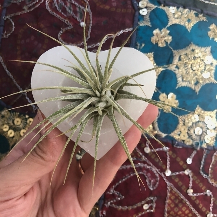 beautiful Selenite Air Plant Di - intrinsicjourneysjewelry | ello