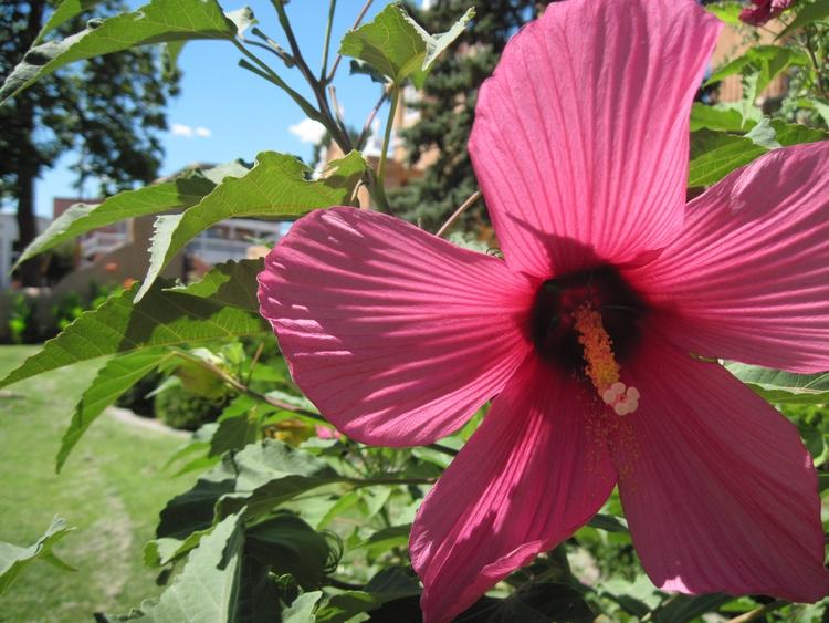 bigpinkflower, summertime, NMlove - laylas | ello