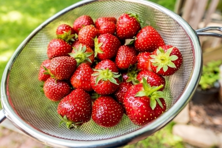 Fresh strawberries garden - gardening - purplesulfurstudio | ello