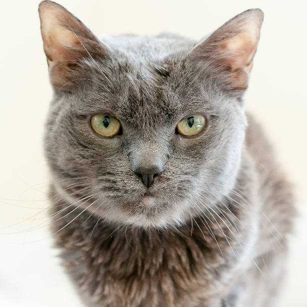 COMMENT SHARE Meet: Leo, Neuter - snapcats   ello