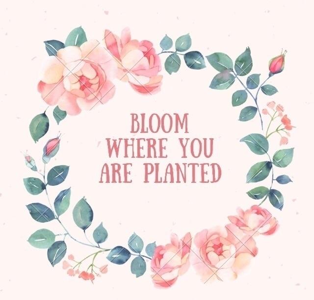 feel belong place grow. plant s - kismibella1 | ello