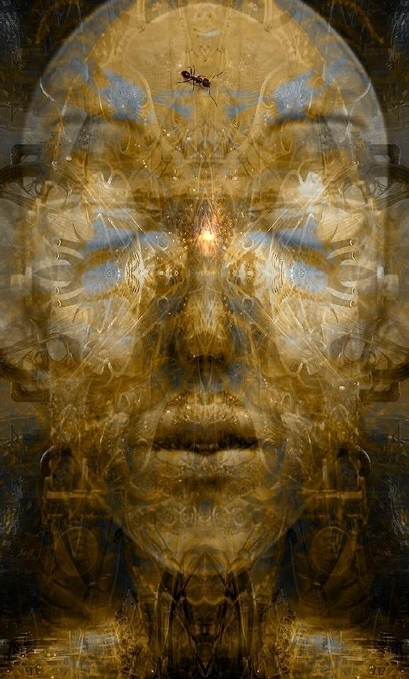 Meditation restless mind, foxes - alanbrooksart | ello