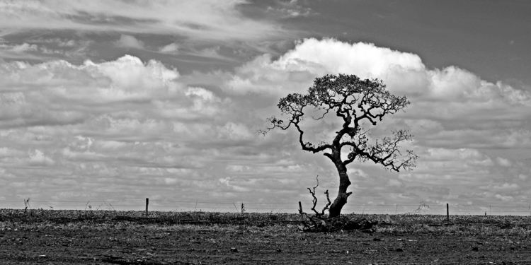 tree - blackandwhite, photography - alexx_1960 | ello