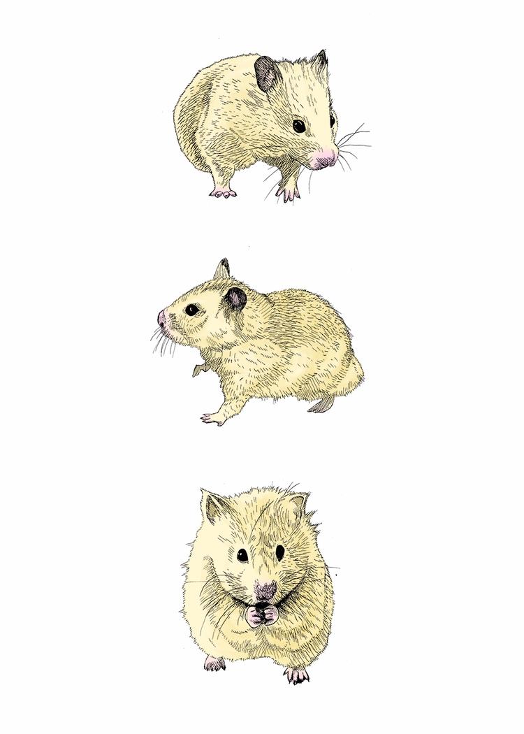 Hamster Trio! Year 35 Day 77 - hamster - mydiagonallife | ello