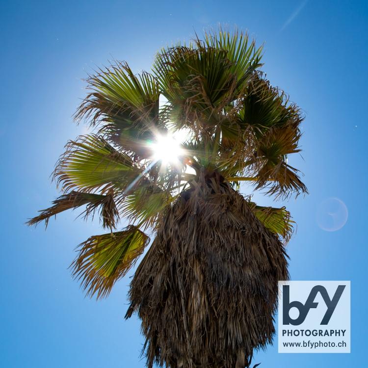 summer @bfyphoto - photography - bfyphoto | ello