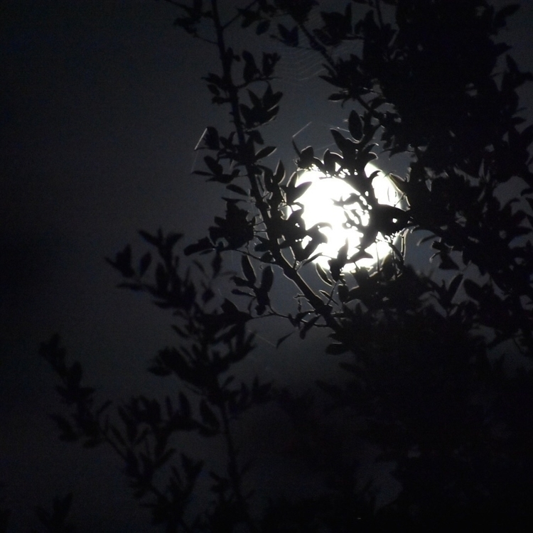 moon - helloviolet   ello