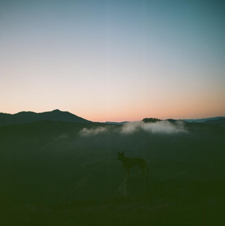 night, hill88, marin, ellodogphotography - teetonka | ello