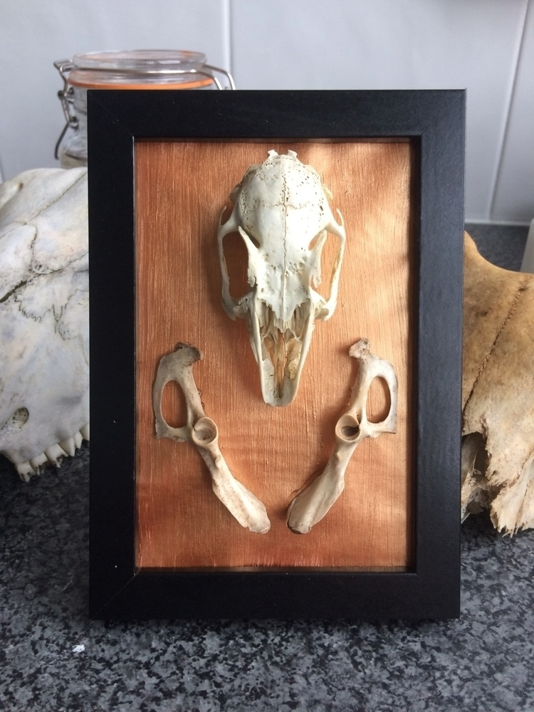 Beautiful handmade taxidermy ar - life-after-mourning | ello