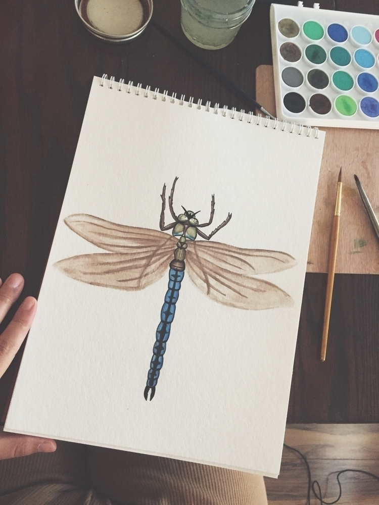Emperor - Dragonfly, watercolor - wildflowerramblings | ello