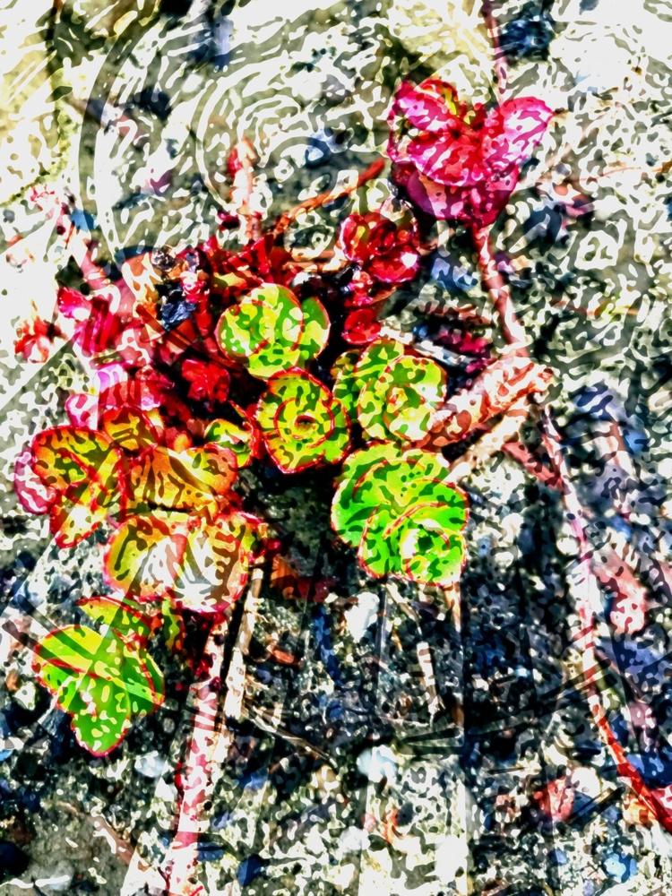 Floral Abstraction milestone im - jmbowers   ello