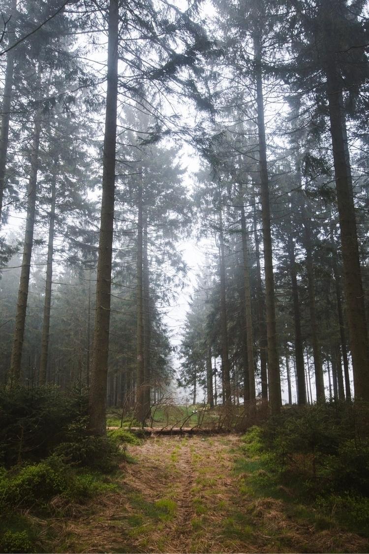 Explore - landscape, nature, belgium - charlespacque | ello