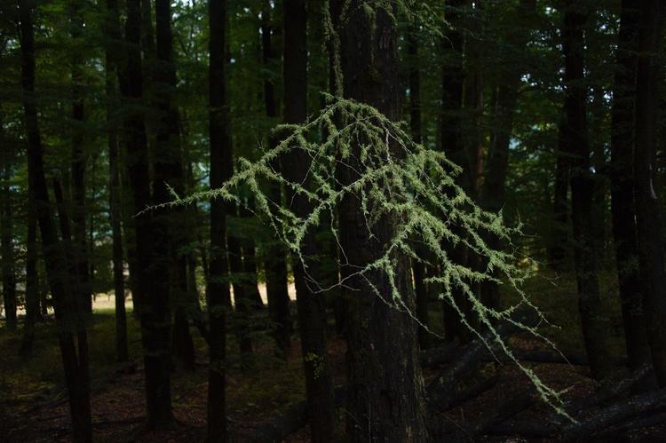 Lichen branch photography 2016 - fenrizwolfe | ello
