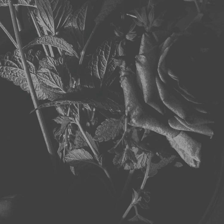 blackandwhite, bnw, naturephotography - kalabruixa | ello